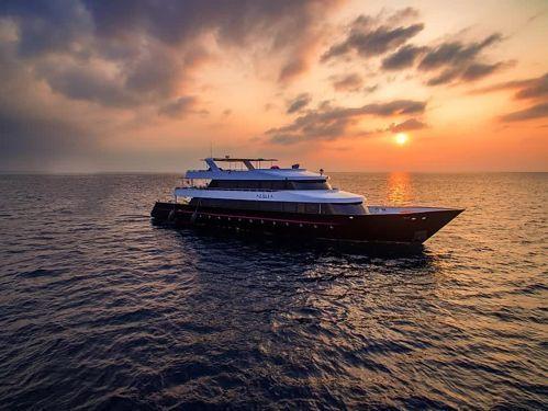 Motorboat Custom Built (2015)